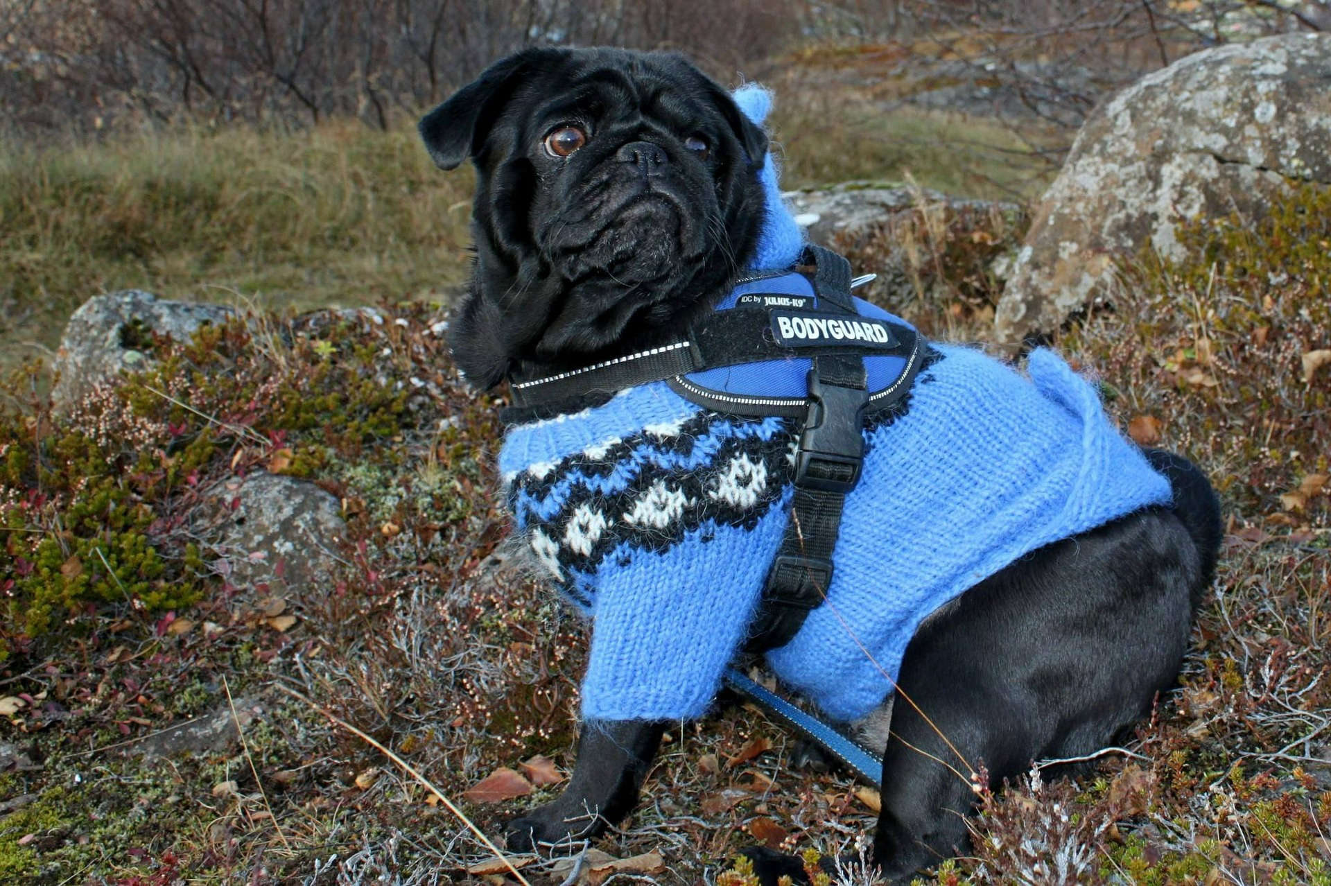 Do Dogs Need Sweaters or Jackets? | St. Matthews Animal Clinic